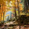 SARL Bonnet Bois, bois de chauffage en Lozère