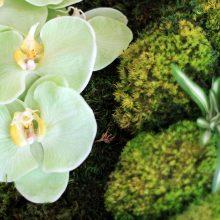 Décoration bois et fleurs naturalisée