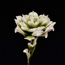 fleur ivoire et verte FLORA