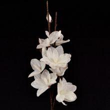 branche fleurs blanches