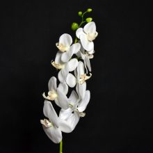 branche orchidée simple GF blanche