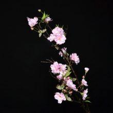 Branche de cerisier rose FLORA
